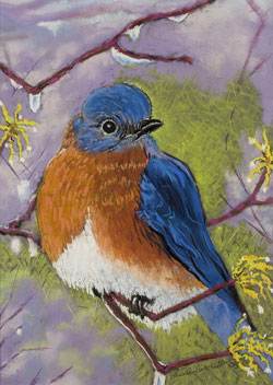 Blue Bird Pastel Painting By Paula Winchester