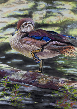 Duck In Water Pastel Painting By Paula Winchester