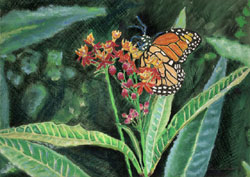 Monarch On Red Flowers Pastel Painting By Paula Winchester