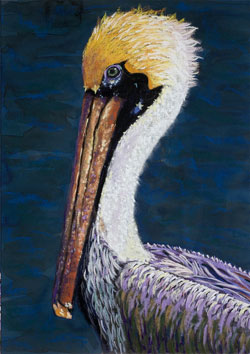 Pelican Pastel Painting By Paula Winchester