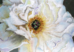 White Chinese Tree Peony Pastel Painting By Paula Winchester